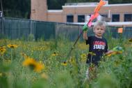 Jake Savage, 6, helps pick up flags in the wildflower meadow at Shue-Meddill Middle School, where his mother is principal. (Newark Post)